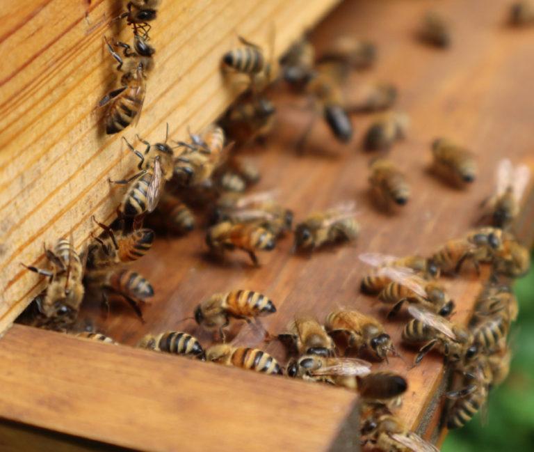 Bees main page
